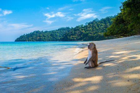 monkey-3251530_1280